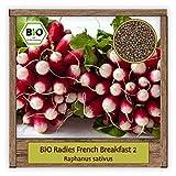 BIO Radieschen Samen Sorte French Breakfast 2 (Raphanus...