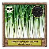 BIO Lauch Samen Sorte Ischikrona (Allium fistulosum)...
