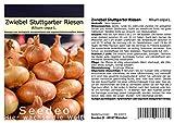 Seedeo® Zwiebel Stuttgarter Riesen (Allium cepa L.) 300...