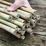 Bambusstäbe - Bambusrohre 105 cm/15-17 mm für...