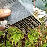 150 Florfliegenlarven - Nützling u.a. gegen Blattläuse und...
