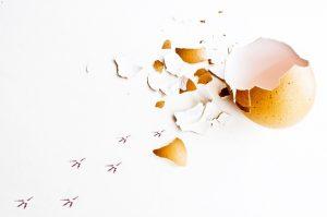 Eierschalen gegen Schnecken
