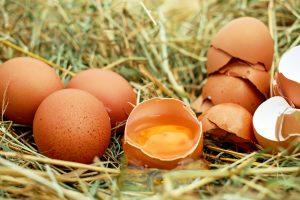 Helfen Eierschalen gegen Schnecken