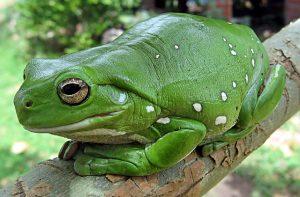 Feinde der Nacktschnecken im Garten ansiedeln zum Beispiel Lurche, Igel, Vögel, Kröten