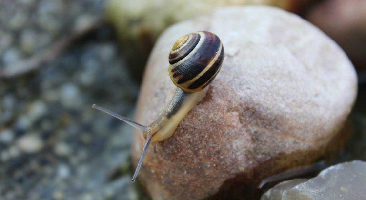 Gesteinsmehl gegen Schnecken Nacktschnecken Urgesteinsmehl Steinmehl im Garten verwenden - Was ist dran an diesem Mittel