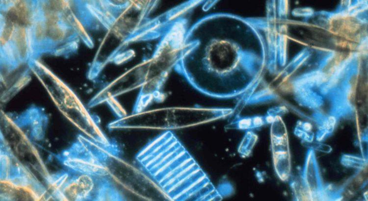 Kieselgur Diatomeen Hilft gegen Schnecken