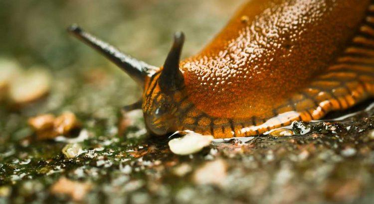 Mittel gegen Schnecken umweltschonend umweltfreundlich ökologisch biologisch ohne Gift oder Gewalt