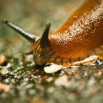 10 Mittel gegen Schnecken. Was hilft nachhaltig – ohne Gift?