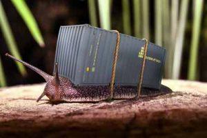 Mulchen gegen Nacktschnecken Schnecken im Garten Schneckenschutz Schneckenhilfe Schneckenabwehr Mulchmaterial vergleichen