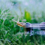 Pflanzenhut & Anzuchtglocke | Pflanzen gegen Nacktschnecken und andere Gefahren schützen | Tipps & Tricks +++