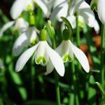Schneckenschutz im Frühjahr - Was kann man tun? | Schneckenplage verhindern