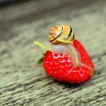 Schnecken im Garten. Nutzen und Schaden. Was kann man tun?