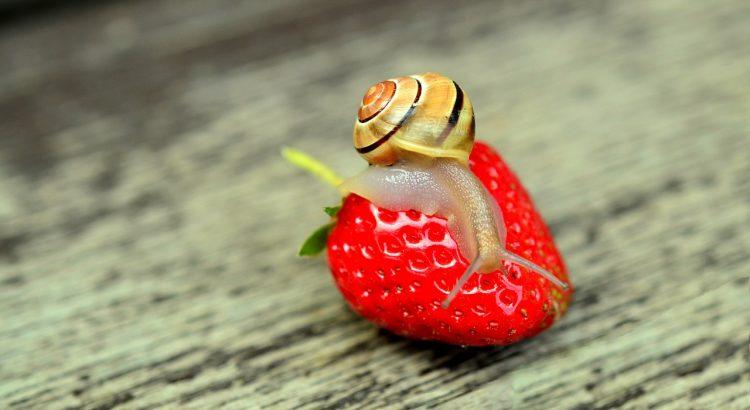 Schnecken im Garten Schadschnecken und Nützlinge