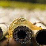Schneckenkorn: Giftigkeit & Gefahr | Umweltfreundliche Alternativen | Tipps & Tricks +++