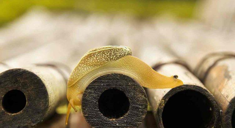 Schneckenkorn Schneckengift Risiken Probleme Gefahren