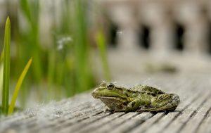 Schneckenplage durch naturnahen Garten mit Teich beheben