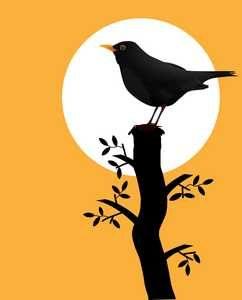 amsel vogel gegen Schnecken Nacktschencken im Garten Fressfeinde ansiedeln_Schneckenhilfe Vogelplatz Nistplatz Vogelnistkasten Vogelnisthöhle