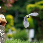 Vögel gegen Nacktschnecken. Verbündete im Garten.