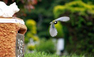 vogel gegen Schnecken Nacktschencken im Garten Fressfeinde ansiedeln_Schneckenhilfe Schneckenschutz Schneckenabwehr Voegel Meisen