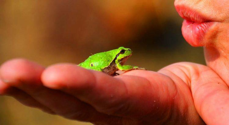 Amphibien freundlicher im Garten ansiedeln Frösche Kröten Eidechsen anlocken
