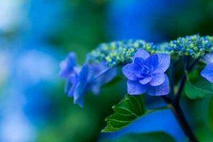 Blumen die Nacktschnecken nicht fressen schneckenresistente Blumenpflanzen Welche Pflanzen mögen Schnecken nicht