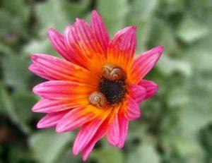 Blumen Pflanzen Kräuter Schnecken Nacktschnecken lieben mögen anziehen gerne fressen anlocken