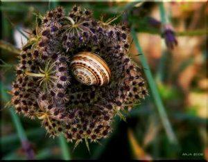 Pflanzen Stauden Kräuter Blumen Sorten Gemüse das Schnecken Nacktschnecken lieben anlockt anzieht gerne fressen mögen