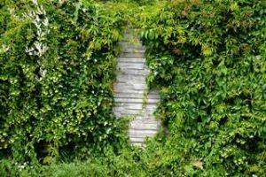 Trockensteinmauer Hecke Trockenmauer Bewachsen amphibienfreundlicher Garten Artenreich Artenvielfalt Salamander