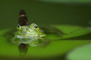 Insektenfreundlichen Garten gestalten Frosch Schmetterling Insekten im Garten ansiedeln anlocken Schneckenschutz Schneckenabwehr Schneckenbekämpfung Nacktschnecken Käfer Fliegen Gartenteich