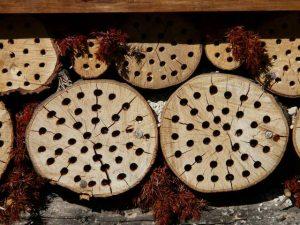 Nistholz Insektenhotel mit Rissen, da ins Hirnholz gebohrt wurde