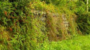 Steinmauer Hecke als Rückzugsraum für viele Tiere