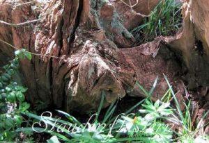 Totholz als Insektenhotel Insektenfreundlicher Garten Ökologisches Gleichgewicht Artenreichtum Biodiversität Artenvielfalt Schneckenplage vorbeugen
