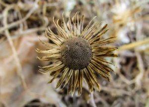 Trockene Pflanzenblüte bieten vielen Insekten einen Lebensraum