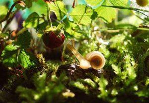 Welches Gemüse fressen mögen Schnecken Nachtschnecken was zieht Schnecken an