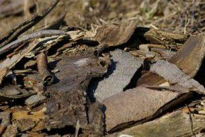 Womit befüllt man ein Hochbeet Holzreste Rinde Äste Zweige