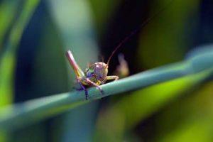 grashüpfer im garten Insektizide schaden der Artenvielfalt Biodiversität Artenreichtum Pestizide