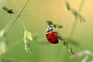 insektenfreundlicher Garten Insekten gegen Schädlinge Schnecken Nacktschnecken Blattläuse Marienkäfer