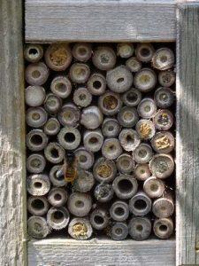 Insektenhotel für Wildbienen aus Pflanzenstängeln Mauerbiene