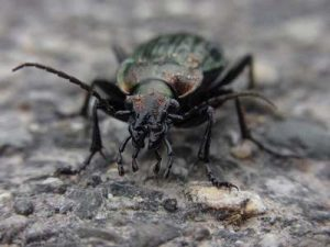 insekten im garten f rdern insektengarten anlegen tipps tricks. Black Bedroom Furniture Sets. Home Design Ideas