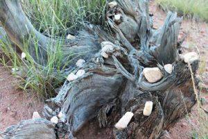 Totholz ist für Käfer eine Notwendigkeit um überleben zu können