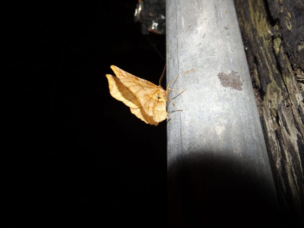 Nachtfalter Licht Nacht Insekten