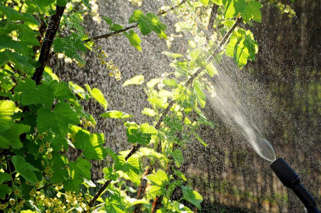 Pflanzen besprühen Schädlingsabwehr