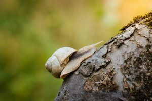 Schnecke klettert auf Baum