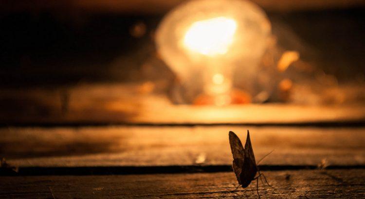 insektenfreundliches Licht Beleuchtung