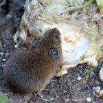 Wühlmausgitter: Pflanzen gegen Wühlmäuse schützen | Anwendung | Tipps & Tricks +++