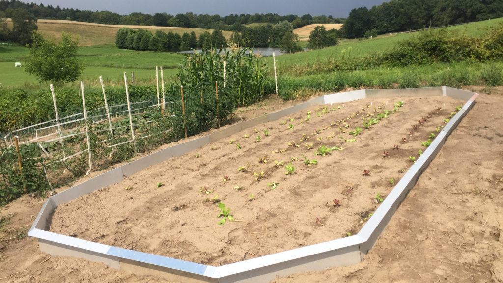 Schneckenzaun großes Beet mit Salaten bepflanzt.