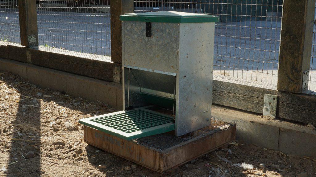 Futterautomat für Hühner mit Trittklappe