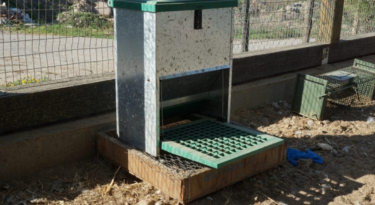 futterautomat hühner rattensicher