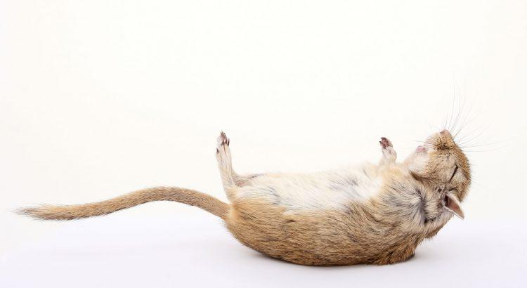 Was ist ein verünftiger Grund Tiere zu töten nach Tierschutzgesetz