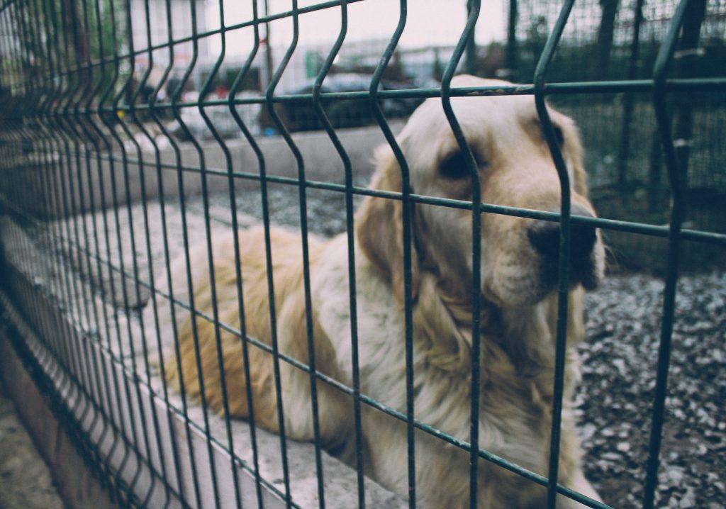 Wie bringt man Tiere tierschutzgerecht unter?
